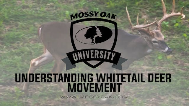 Understanding Deer Movement