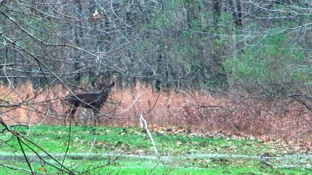 The Heart of the Matter, Part 2 • Whitetails in Mississippi