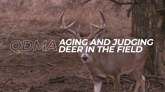 Aging And Judging Deer In The Field