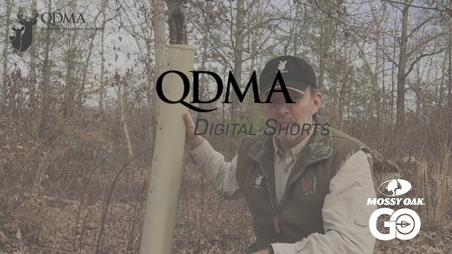 Tree Tube Use • QDMA Shorts