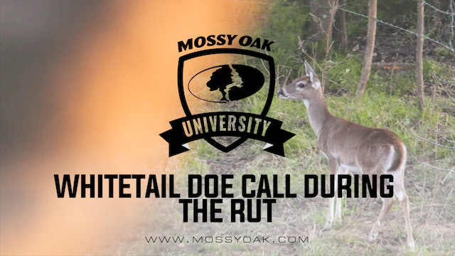 Whitetail Doe Calls & Vocalizations During The Rut