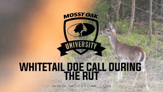 Whitetail Doe Calls & Vocalizations D...