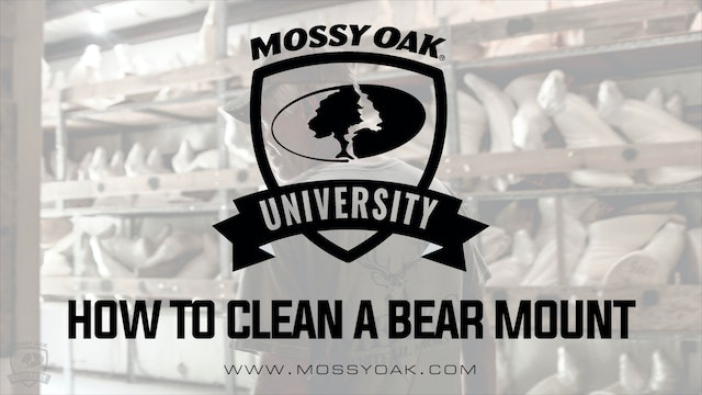 How to Clean a Bear Mount