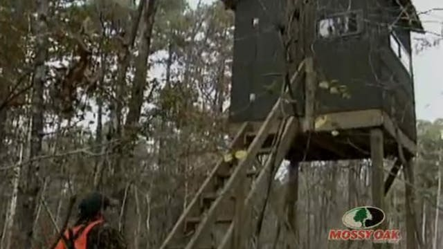 Big Mississippi Bucks • Whitetails in...