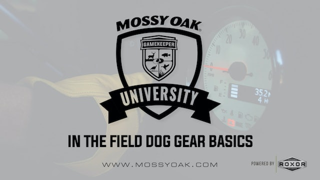 In the Field Dog Gear Basics • Mossy Oak University