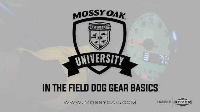 In the Field Dog Gear Basics • Mossy ...