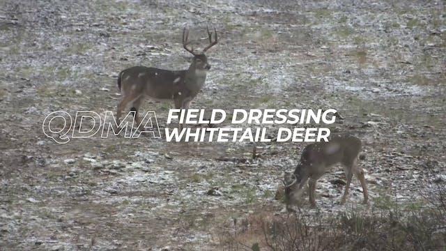 Field Dressing Whitetail Deer