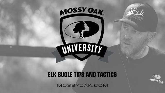 Elk Bugle Tips and Tactics
