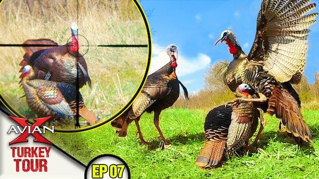 THREE Longbeards Down! Dekes Destroyed! • Avian X Turkey Tour