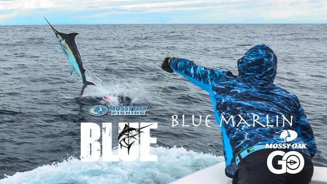 Blue Marlin Part 2 • BLUE • Episode 4