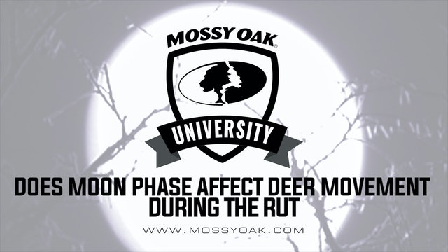Does Moon Phase Affect Deer Movement During the Rut