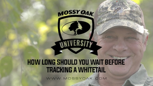 How Long Should You Wait Before Tracking Any Deer