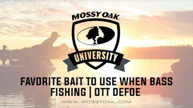 Favorite Bait to Use When Bass Fishin...