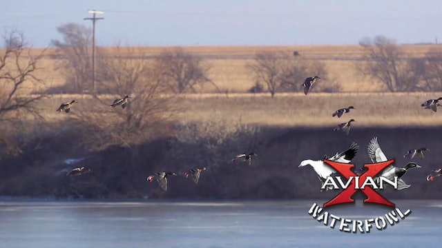 Big Water • Avian X Waterfowl