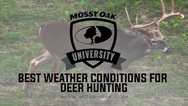 Best Weather Conditions For Late Season Whitetail Hunting