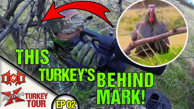 HUGE Gobbler at 2 Steps, BUT He's Beh...