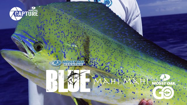 Mahi Mahi • BLUE • Episode 2
