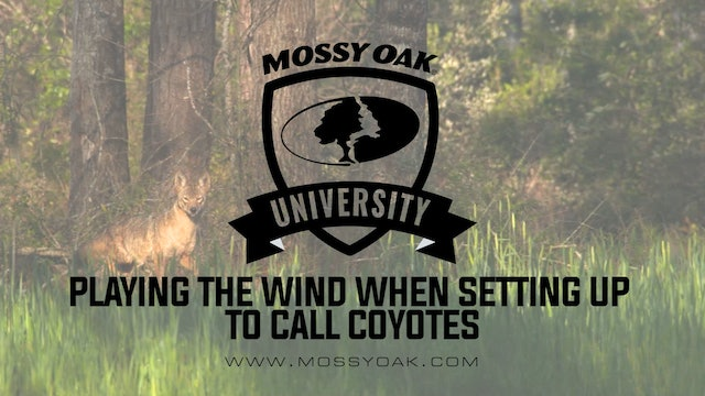 Playing The Wind When Setting Up To Call Coyotes