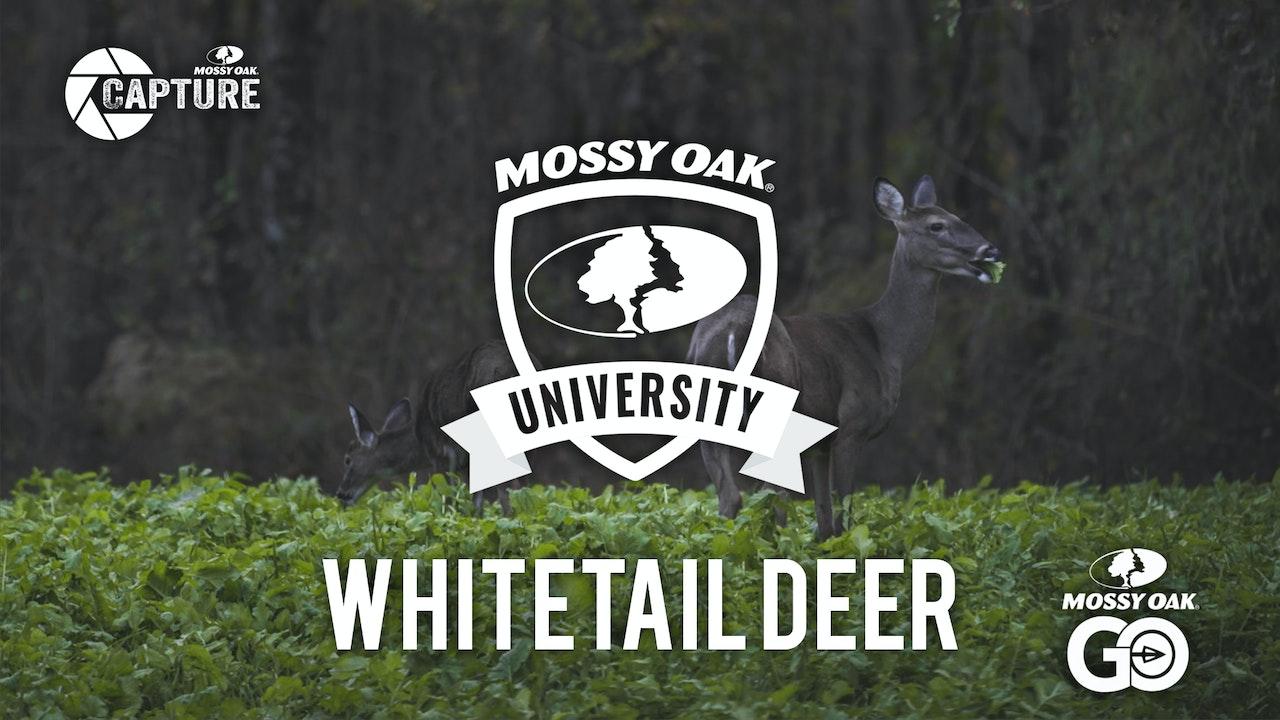Whitetail Deer • Mossy Oak University