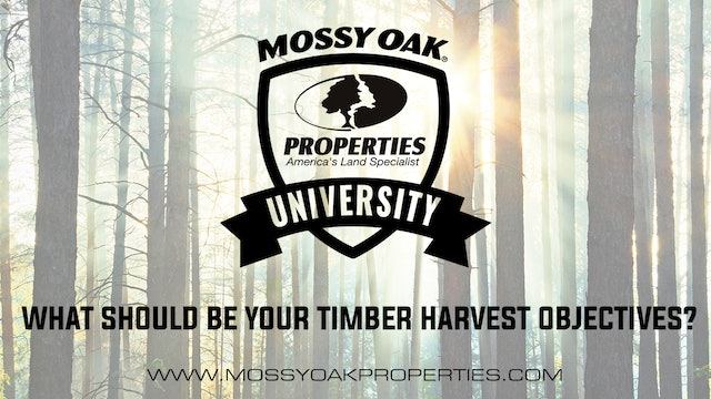 What Should Be Your Timber Harvest Objectives?