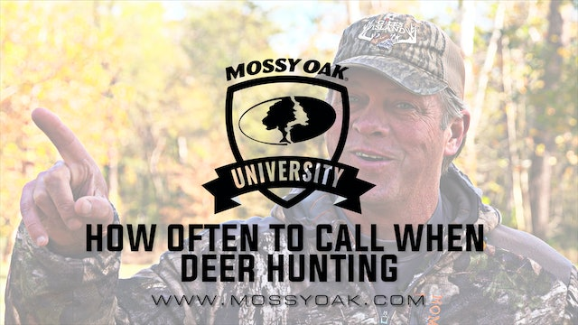 How Often Should You Grunt Or Call | Pre-Rut Deer Calling