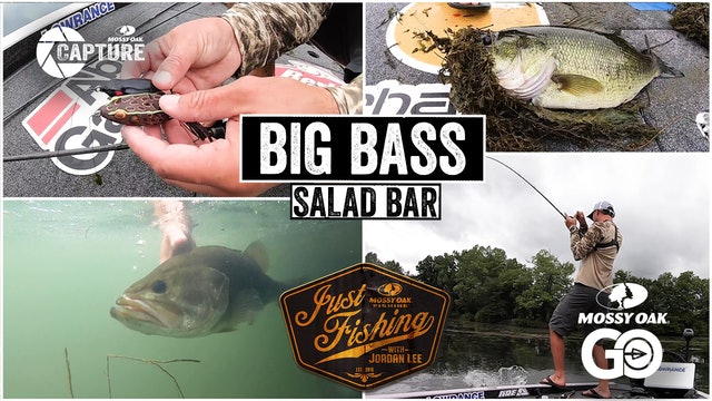 Big Bass Salad Bar • Just Fishing with Jordan Lee