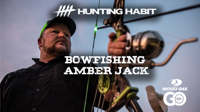 Hunting Habit · Bowfishing Amber Jack