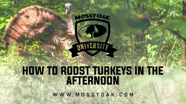 How to Roost Turkeys in the Afternoon