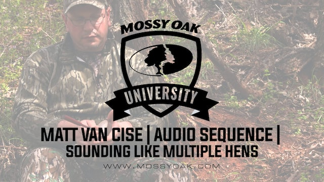 How to sound like multiple turkeys - audio sequence