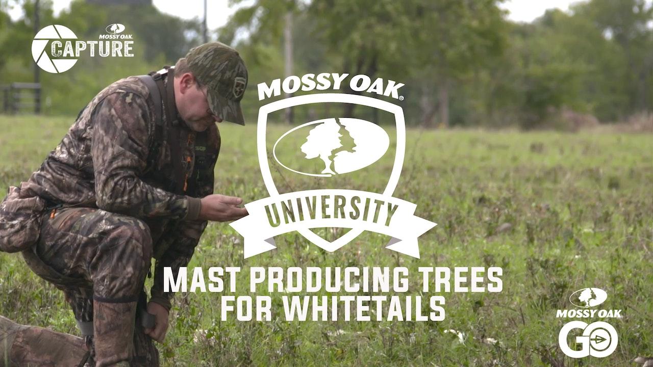 Mast Producing Trees • Mossy Oak University
