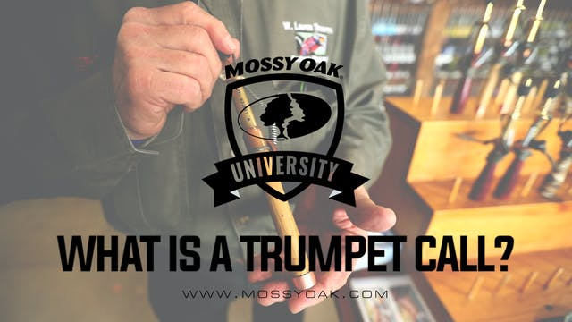 What Is A Trumpet Call?