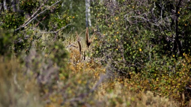 Mountain Country, Part 1 • Mule Deer ...