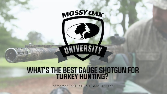 What is the Best Gauge Shotgun for Turkey Hunting?