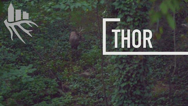 Thor • The Season