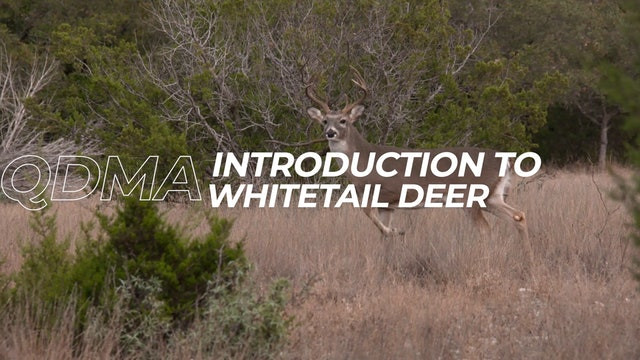 Introduction To Whitetail Deer
