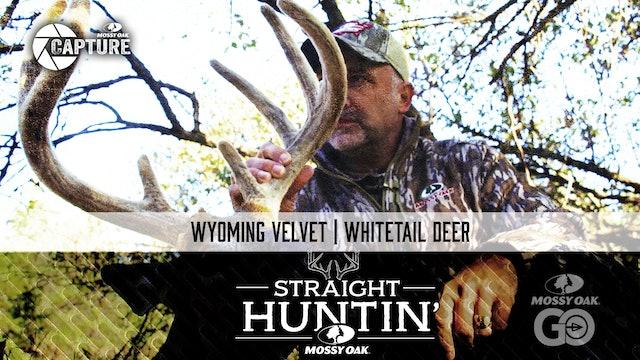 Wyoming Velvet • Whitetail Deer • Straight Huntin'