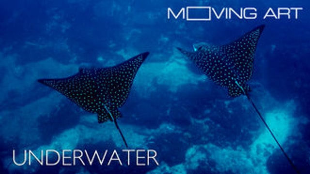 Moving Art: Underwater