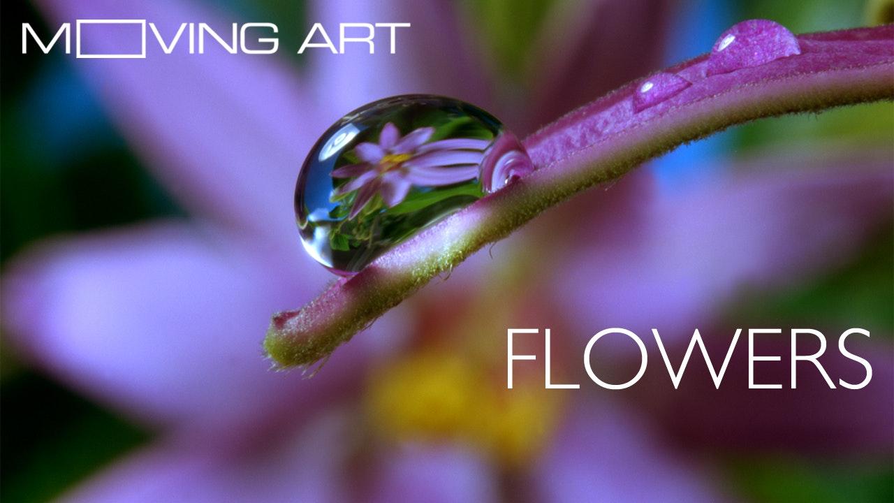 Moving Art: Season 1: Flowers