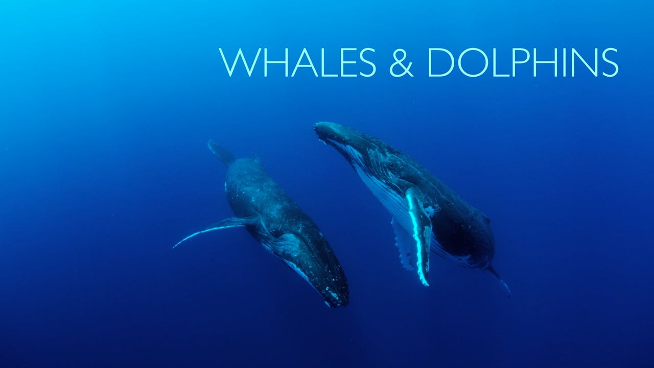 Moving Art: Season 2: Whales & Dolphins