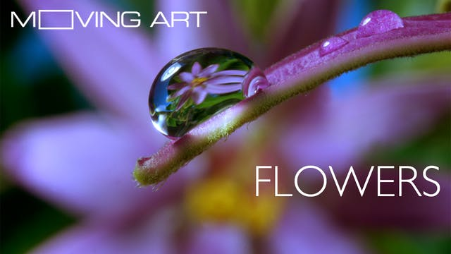 Moving Art: Flowers