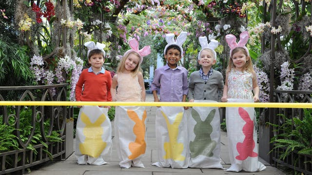 Martha Stewart's Egg-cellent Easter