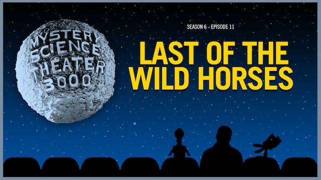 611. Last of the Wild Horses