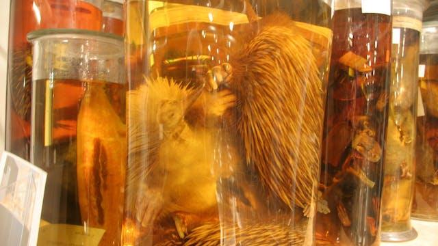 Museum Secrets: Inside the Natural Hi...
