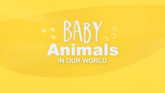 Baby Animals in our World (No Voice-over)
