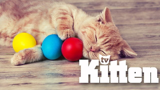 Kitten Slow TV