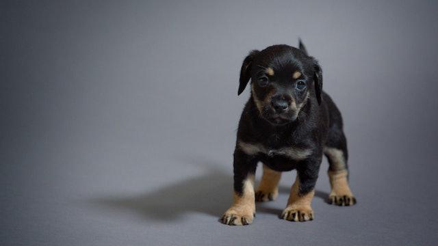 Puppy Secrets