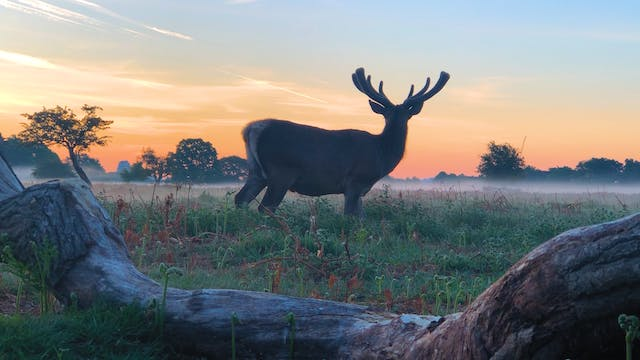 Preview: Royal Parks Slow TV