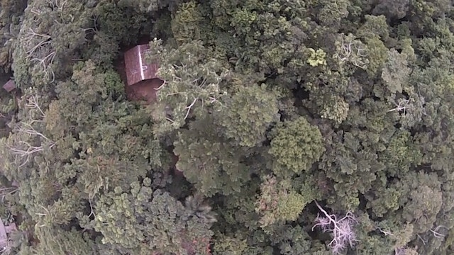 34. Wide Angle High Above Trees