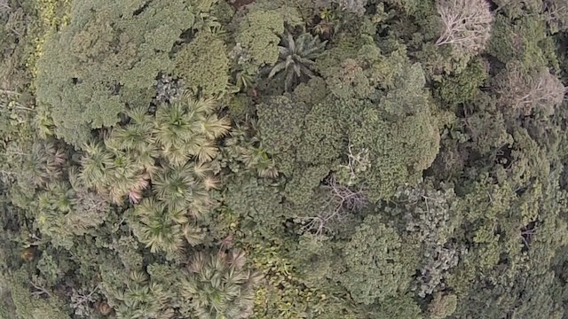 44. Fisheye Treeline From Above