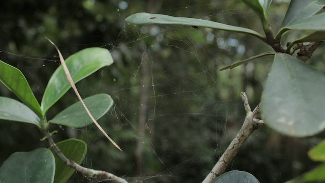 14. (TL) Spider Web On Branches, Spid...